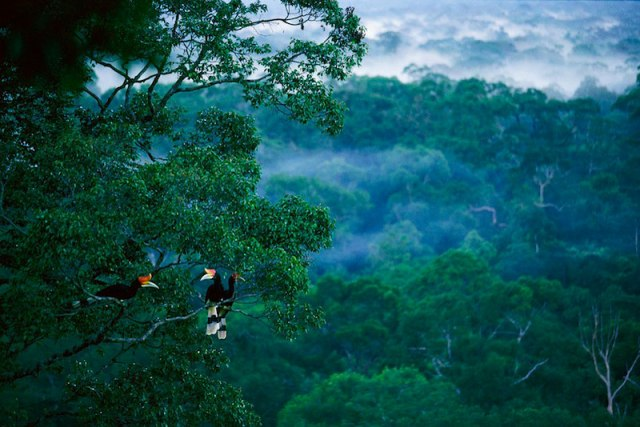 Image courtesy of Interactive Jungle