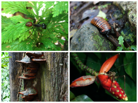 Borneo Bugs