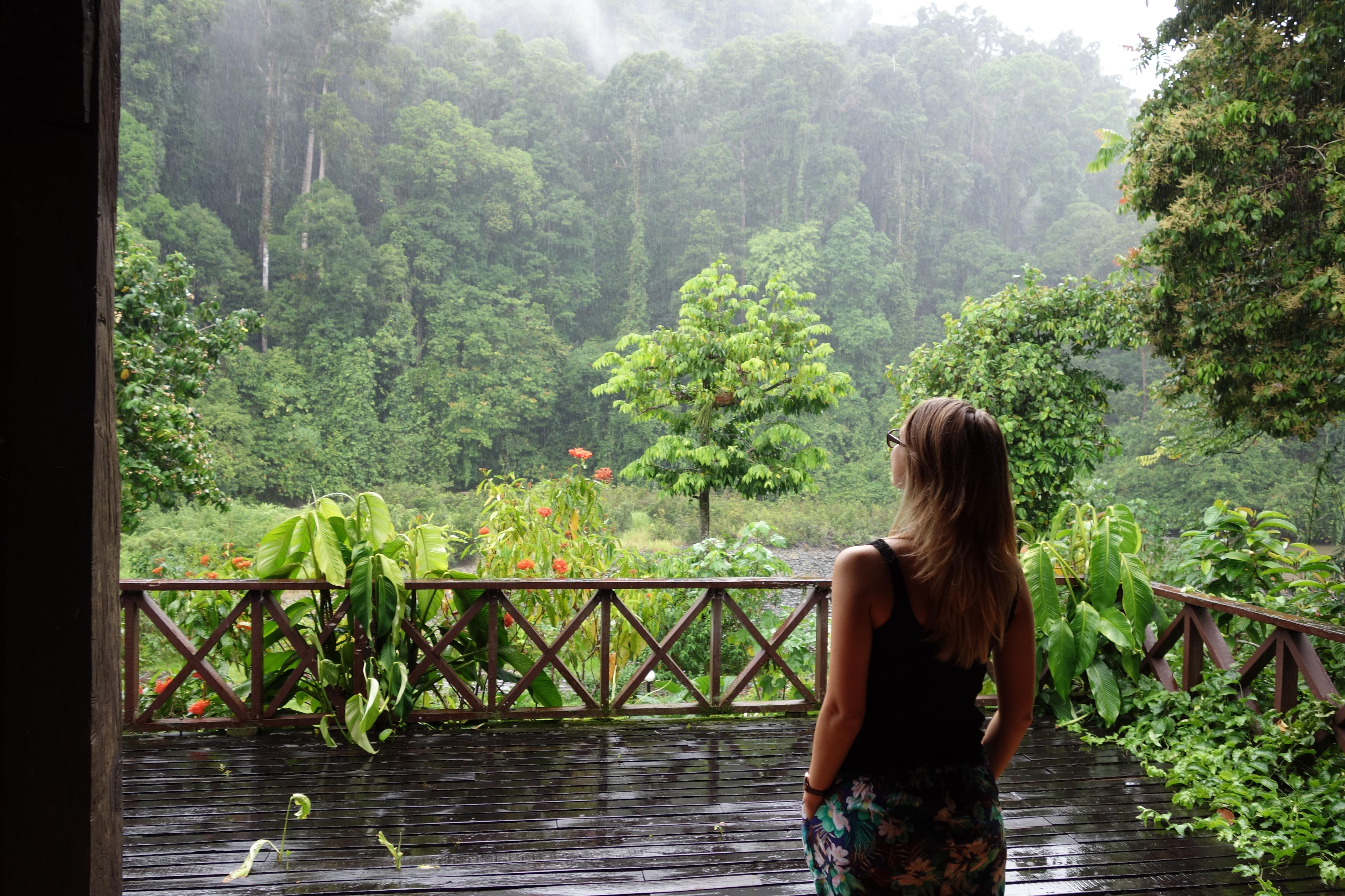 Into The Jungle Danum Valley Primary Rainforest Borneo